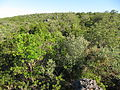 Algarve barrocal (5751914834).jpg
