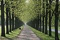 Allee by Niederkasseler - panoramio.jpg