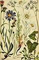 Alpenflora; die verbreitetsten Alpenpflanzen von Bayern, Österreich und der Schweiz (1922) (18082978256).jpg