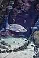 Amazing underwater world II.jpg