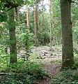 Ambion Wood - geograph.org.uk - 918499.jpg