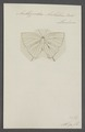 Amblypodia - Print - Iconographia Zoologica - Special Collections University of Amsterdam - UBAINV0274 050 12 0002.tif