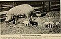 American breeders magazine (1913) (18118267225).jpg