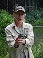 Amphibian Monitoring at Heart Lake - YFMP (9271736796).jpg