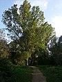 Anella verda - Font dels Frares - panoramio (1).jpg