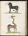 Animal drawings collected by Felix Platter, p2 - (47).jpg