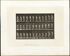Animal locomotion. Plate 103 (Boston Public Library).jpg
