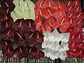 Anthurium displayed in shop from Lalbagh flower show Aug 2013 8645.JPG