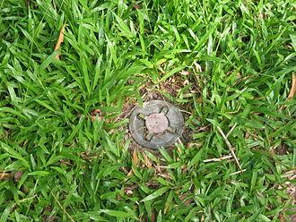 Anti-personnel mine - Anti personnel mine in Cambodia