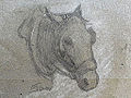 Appian A. - Charcoal - Etude de tête de cheval - 29.4x17.8cm.jpg
