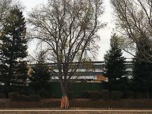 Apple Park - Wikipedia