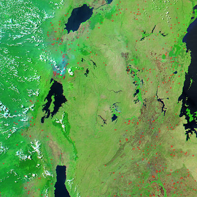 Image of the region between Lake Victoria (on the right) and Lakes Albert, Kivu and Tanganyika (from north to south) showing dense vegetation (bright green) and fires (red). Aqua rwanda 05jun04 250m.jpg