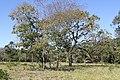 Araguainha - State of Mato Grosso, Brazil - panoramio (1089).jpg