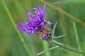 Araignées, insectes et fleurs de la forêt de Moulière (Les Chirons Noirs) (28968145101).jpg