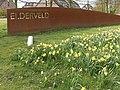 Arnhem-Elderveld, narcissen bij binnengaan van de wijk (de Hollandweg-Batavierenweg) foto6 2016-03-30 14.27.jpg