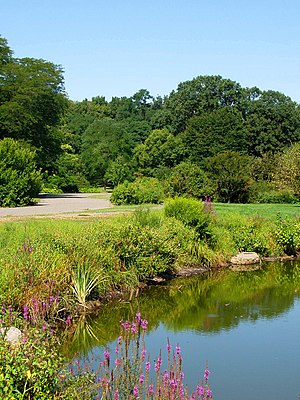 Arnold Arboretum - One of the small ponds within Arnold Arboretum