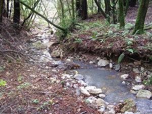 Arroyo Seco Creek - Middle reach of Arroyo Seco Creek