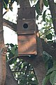 Artificial nest box for birds by Raju Kasambe DSC 8153 (2) 06.jpg
