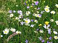 Ausschnitt Blumenwiese 1.jpg