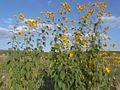 Autumn - 28 (2009). (16099623380).jpg