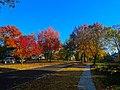 Autumn Colors in Maple Bluff - panoramio (1).jpg