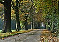 Autumn Lane - geograph.org.uk - 992055.jpg