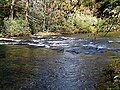 Autumn Leaves South Toe River Celo Camp NC 4259 (26172086309).jpg