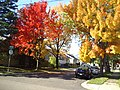 Autumn Moncton New Brunswick (8203990572).jpg