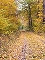 Autumn at its peak in Hällekis Nature Reserve.jpg