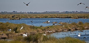 Emergency Wetlands Resources Act - A rather amazing diversity of waterfowl concentrated in a wetlands management area of Bayou Sauvage National Wildlife Refuge. At least 20 species are in this frame of view or the sky above. A Northern Harrier is hidden behind the center Great Blue Heron. Photo taken by Mr. Bill Lang on 12/9/2010. Photograph used with written permission from Mr. Lang.