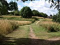 Avon Valley Nature Reserve - geograph.org.uk - 1400604.jpg