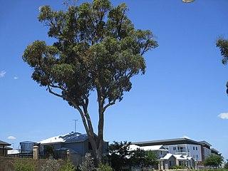 Baldivis, Western Australia Suburb of Perth, Western Australia
