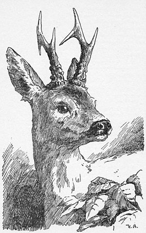Bambi (character) - Grown-up Bambi in Bambi's Children, as drawn by Hans Bertle.