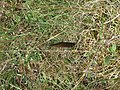 Barbed Wire and ground spear (21660118135).jpg
