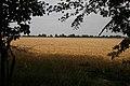 Barley field - geograph.org.uk - 1019553.jpg