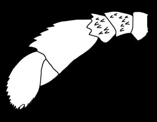 Eurypterina suborder of eurypterid