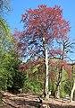 Baumgruppe im Deerth.jpg