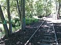 Beautiful trees along abandoned railroad marked for removal - panoramio.jpg