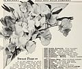 Beckert seed and bulb co. - a good place to start your garden (1931) (20171663940).jpg