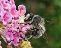 Bee March 2008-14.jpg