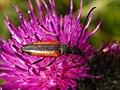 Beetle (9247341296).jpg