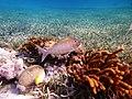 Belize snuba (17655946250).jpg