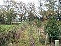 Beside the Millennium Plantation - geograph.org.uk - 1579476.jpg