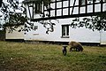 Bethenhausen- half-timbered house-2.jpg