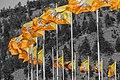 Bhutanese flags in Thimphu.jpg