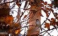 Bird (58132362).jpeg