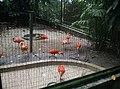 Birds in Zoo Negara Malaysia (7).jpg