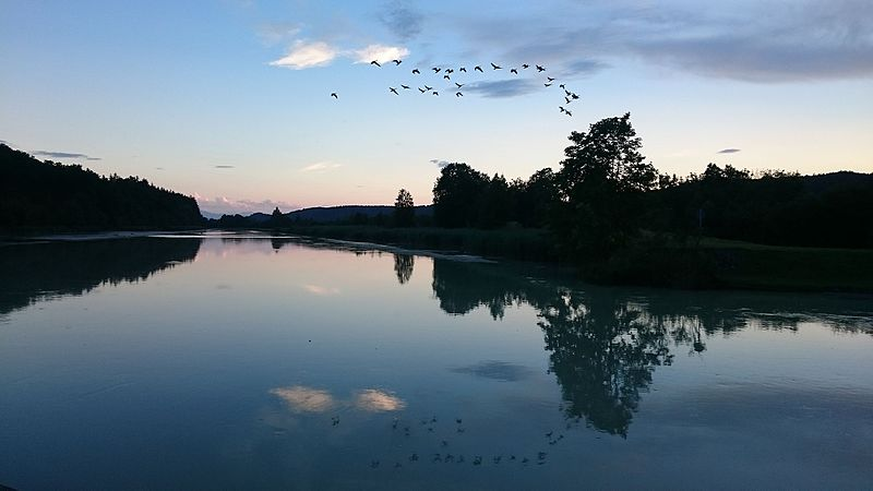 File:Birds over Isarkanal.jpg