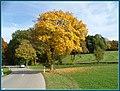 Blätter fallen - panoramio.jpg