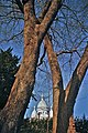 Blick auf Sacré-Cœur 2008 (Nltz0225).jpg